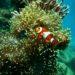 Beste en leukste aquarium decoratie van 2021
