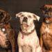 Beste hondenhalsband van 2020