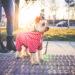 Beste en leukste hondentrui van 2021