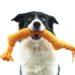 Beste en leukste hondenspeeltjes van 2021