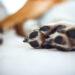 Beste nagelknipper voor honden van 2021
